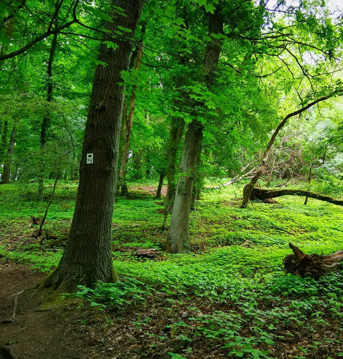 Vesna Enderle Waldcoaching